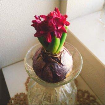 _水栽培できるかわいい花瓶 2Wayフラワーベース