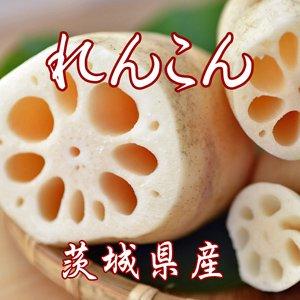 れんこん 【茨城県 土浦産】 送料無料