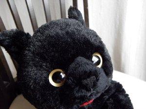 ひざねこ【黒猫】