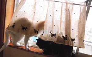 黒猫ラインのカフェカーテン【ショート丈】