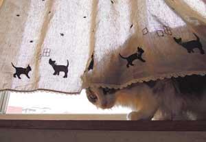 黒猫ラインのカフェカーテン【ロング丈】