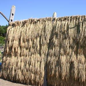 【新米】白米 いわてっこ10kgの写真