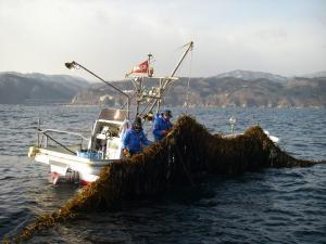 岩手野田村荒海ワカメ「早採り生」 【セットB】の写真