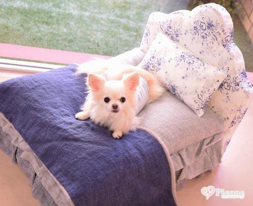 【Louis dog】Linen Bedまるで人間のベッドのようなデザイン♪ピローとブランケットがセットになった高級感のあるベッドです! クッションもふわふわでわんちゃんもいい夢見れそう(*^^) お部屋にこんな可愛いベッドが置いてあったらとっても素敵ですね! ベッドカバ...