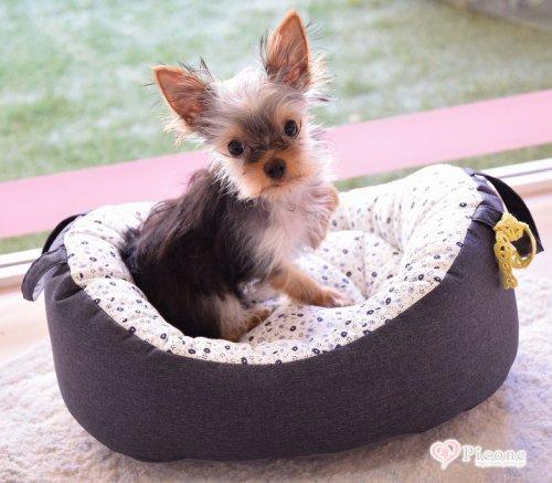 【Louis dog】My First Louisdog/Organic Houseパピーちゃんのファーストベッドに♡外側はデニム風、内側は白地にネイビーとグレーの小花柄でインテリアに合わせやすいシックなデザイン。ベッドの両サイドに持ち手がついているのでわんちゃんを乗せたまま移動...