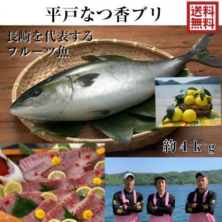 平戸夏香ブリ 4kg (長崎県平戸沖養殖)