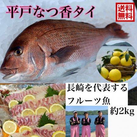 平戸夏香タイ 2kg (長崎県平戸沖養殖)