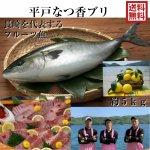 平戸なつ香ブリ 5kg (長崎県平戸沖養殖)