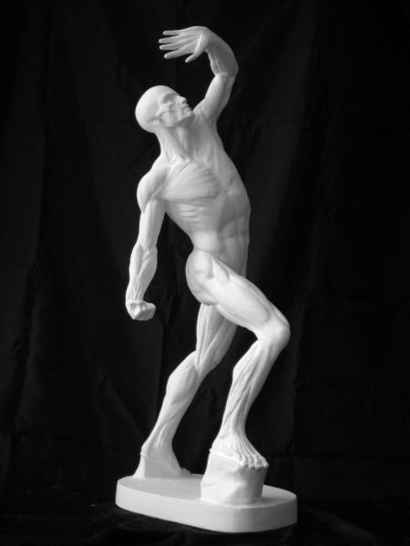 N−009 男子解剖立像(B)