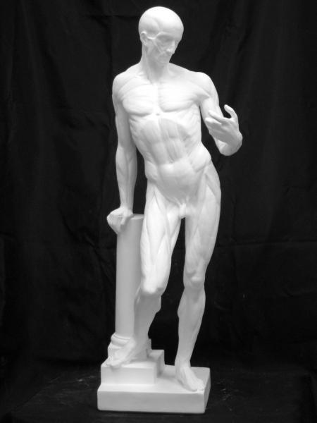 N−010 男子解剖立像(A)