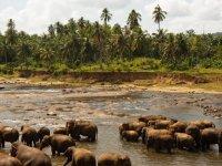 ☆コロンボ発着2泊3日『ゴール市内&紅茶園 | ウダワラウェ国立公園サファリ | シンハラージャ森林保護区トレッキング』