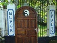 ブラック ビューティ ゲストハウス