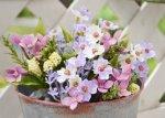 小花がいっぱいミックスフラワーPR