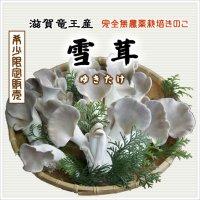 雪茸(ゆきたけ)生 500g(滋賀竜王産)