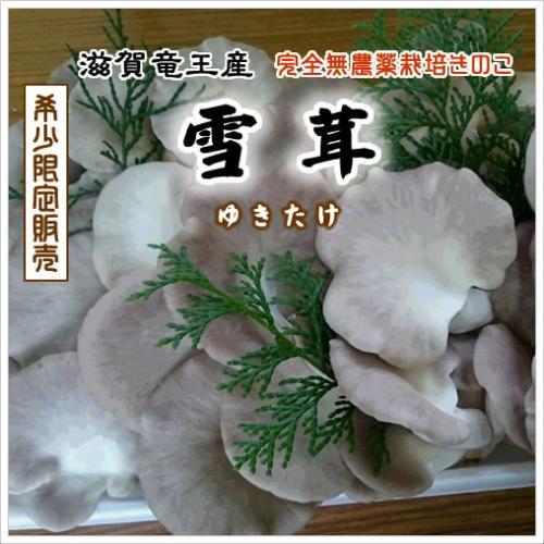 雪茸(ゆきたけ)生 1kg(滋賀竜王産)