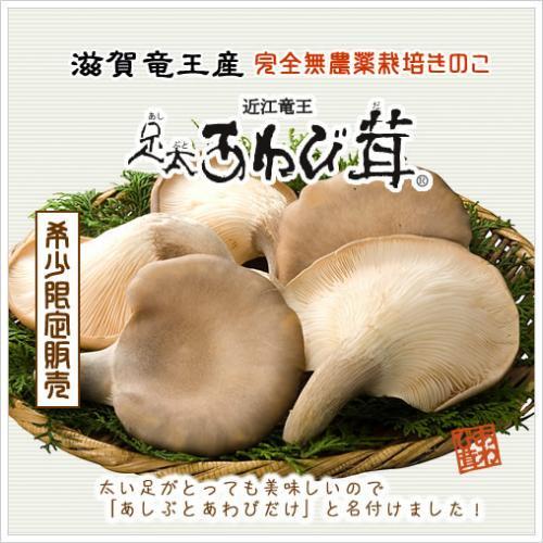足太あわび茸(生)特選 1kg(滋賀竜王産)