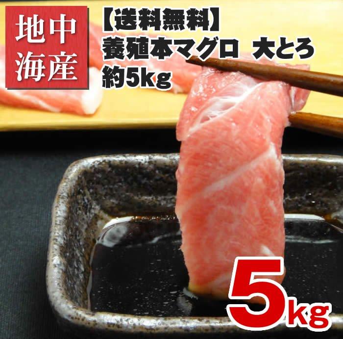 【送料無料】【不定貫】養殖本マグロ 大とろ 不定5kg【業務用】【お得】