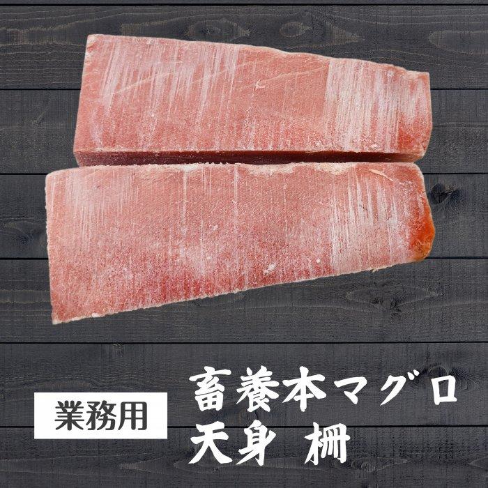 【送料無料】【不定貫】蓄養本マグロ天身 特大約3kg【業務用】【お得】