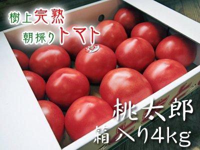 樹上完熟朝採りトマト 桃太郎 箱入り4kg