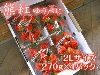 熊本産イチゴ『熊紅(ゆうべに)』2Lサイズ 1箱/1パック(16玉前後)270g以上×4パック
