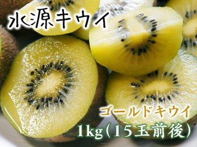 菊池水源キウイ(ゴールドのみ) 1kg(15...