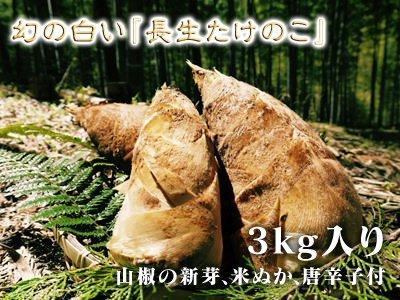 九州熊本産幻の白い『長生たけのこ』3kg入り(山椒の新芽、米ぬか、唐辛子付)数量限定!
