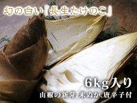 九州熊本産幻の白い『長生たけのこ』6kg入り(山椒の新芽、米ぬか、唐辛子付)数量限定!