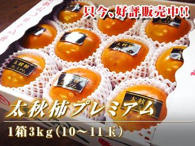 熊本産太秋柿プレミアム3kg前後(10玉〜11玉)