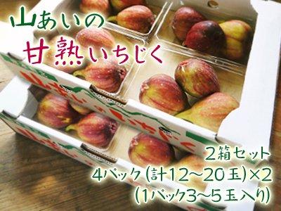 山あいの甘熟いちじく4パック(12〜20玉)2箱セット