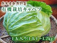 熊本新鮮野菜 牛島さんちの有機栽培キャベツ 1玉入り(1玉1〜1.2kg)
