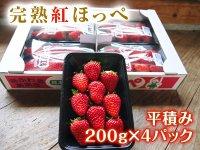 【チルド便】 熊本産イチゴ『完熟紅ほっぺ』平積み4パック(1パック 約200g)