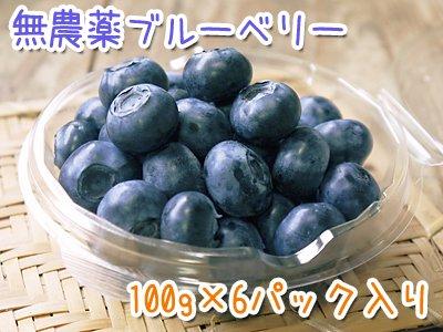 おしどり夫婦が無農薬で育てたフレッシュブルーベリー(100g×6パック)