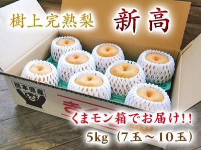 樹上完熟熊本梨『新高』くまもん箱入り5kg(7玉〜10玉)