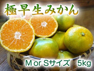 熊本産極早生ザ・みかん(M or S サイズ) 5kg