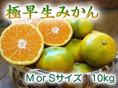 熊本産極早生ザ・みかん(M or S サイズ) 10kg