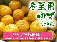 香り高き柚子 冬至用柚子5kg(1箱5kg 35玉前後)※商品はキズあり柚子と同様です