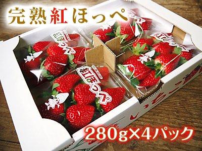 【チルド便】 熊本産イチゴ『完熟紅ほっぺ』4パック(1パック 約280g)