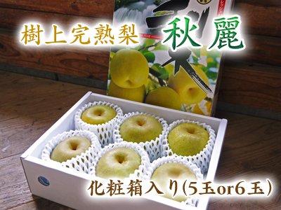 樹上完熟熊本梨『秋麗』化粧箱入り(5玉or6玉入り)