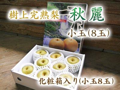 樹上完熟熊本梨『秋麗』小玉 化粧箱入り(8玉入り)