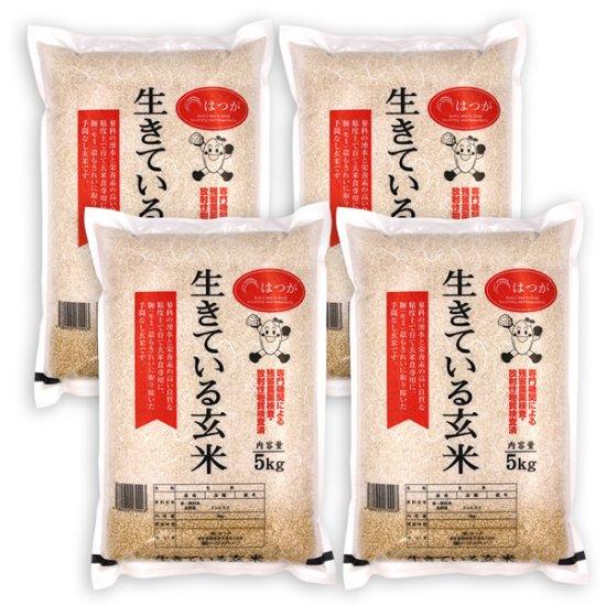 生きている玄米20kg ☆H30年産☆