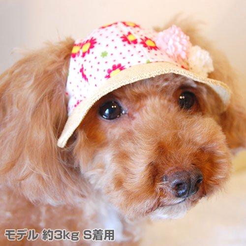 GARDEN OF EDEN(犬の帽子)