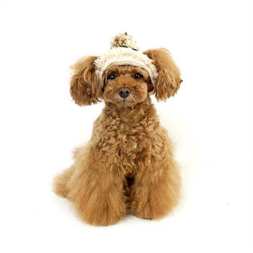 犬の帽子【Garden of Eden】デニムボア...