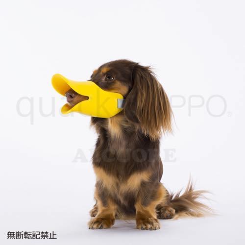 OPPO(オッポ)quack-クァック- SM