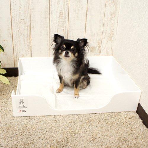 Doggylet 看板犬おすすめ-ドギレット ALCUORE オリジナル-
