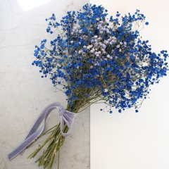 baby's breath blue
