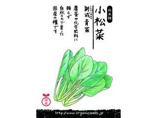 国産/自然農法種子小松菜 新戒青菜<2.5ml・約500粒>