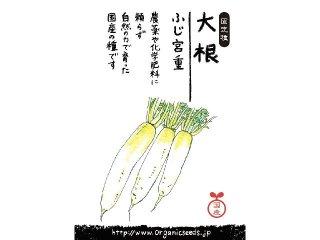 国産/自然農法種子大根 ふじ宮重<2ml・約50粒>
