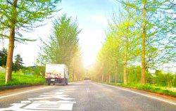 ブログ 並木道から季節を感じとる…(神鍋高原)