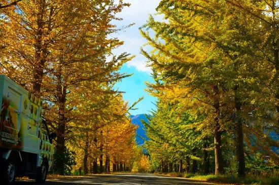 紅葉で寄り道、アイスで寄り道・・・