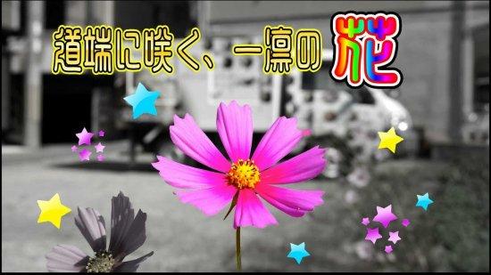 力強く道端に咲く一凛の花のように少しづつ色づいて行きたい! 【画像1】